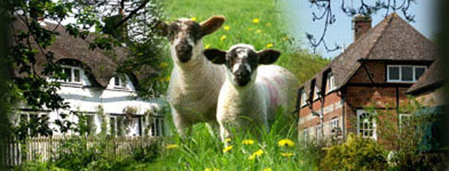 Banner image of house and sheep
